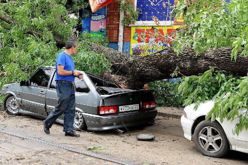 На автомобиль упало дерево, но ущерб возместит страховка